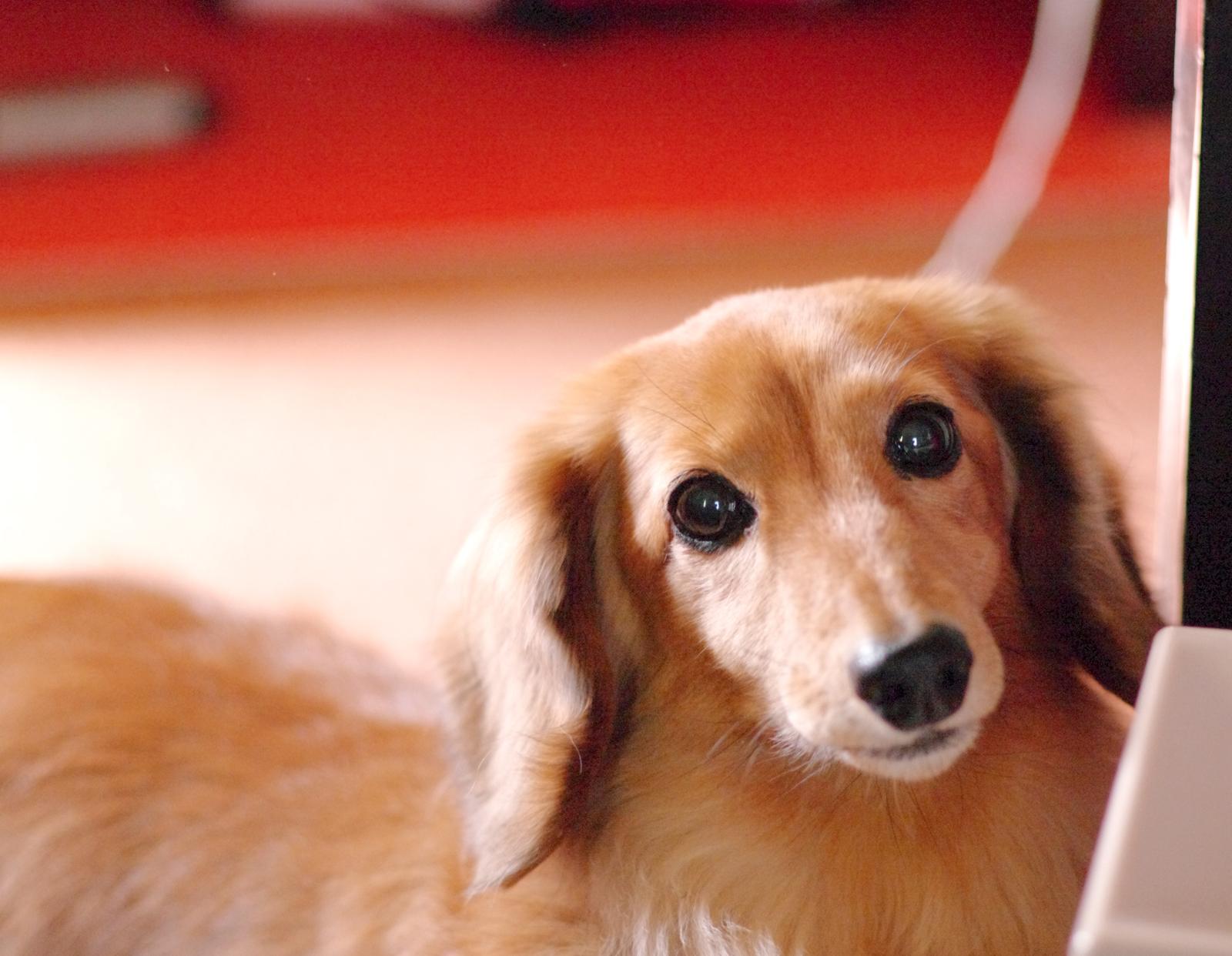 【夢占い】犬の夢・犬小屋の夢が象徴するものや意味とは?