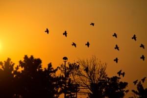 鳥の夢占い診断・意味◆鳥が飛び立つ夢