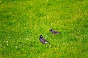 鳥の夢占い診断◆小鳥が飛ぶ夢の意味