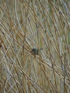 鳥の夢占い診断・意味◆うぐいすが鳴く夢