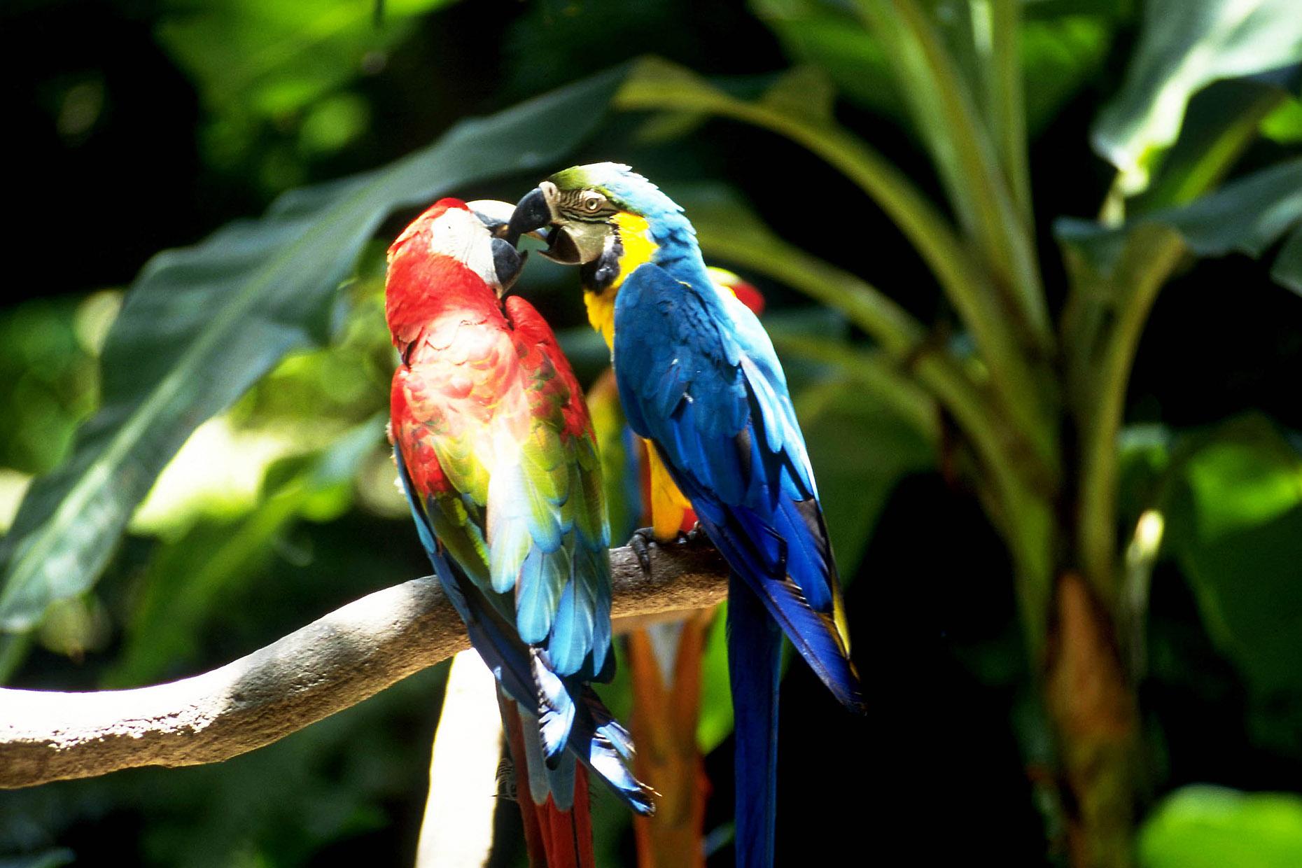 【夢占い診断】鳥を捕まえる夢、鳥が飛ぶ夢、攻撃される夢など鳥の夢の意味