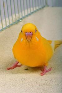 鳥の夢占い診断・意味◆カゴの中の小鳥の夢