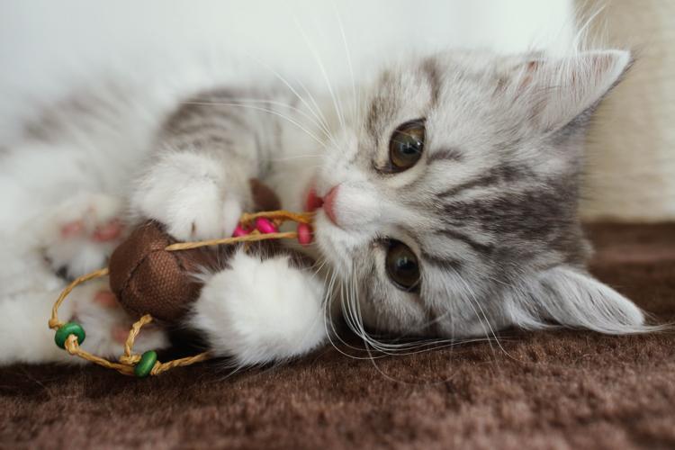 恋愛ストレス解消☆めちゃくちゃ癒される猫&犬の画像まとめ♥
