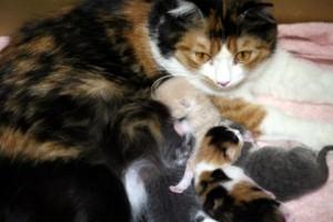 出産に関する夢占い診断の意味■動物が出産する夢
