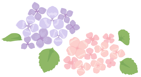 【運命の人&金運を引き寄せ】2018年12月6日の紫陽花おまじないにチャレンジ!【毎月6のつく日の幸運おまじない】