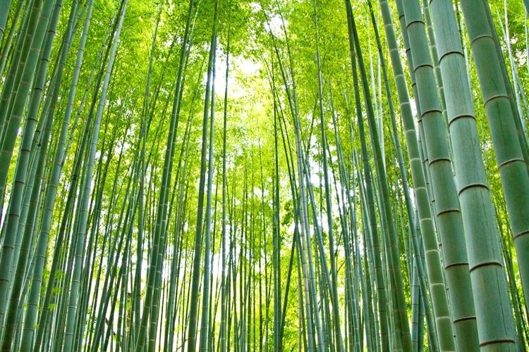 目の前に竹があります。高さはどれくらい?