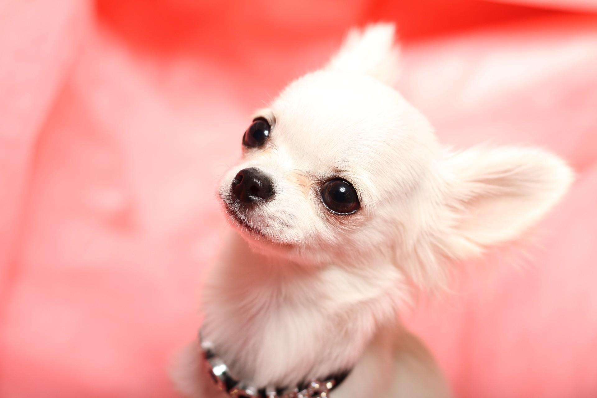犬占いであなたの性格診断!無料で簡単にあなたは何犬か診断します