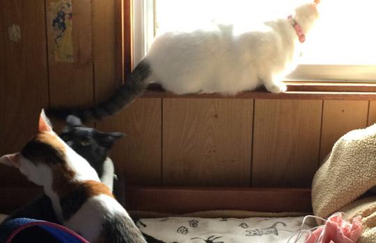 たくさんの猫と暮らすということ【もふだらけ】