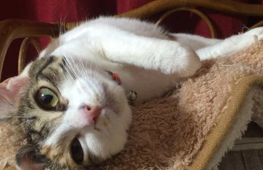 キャットタワーの選び方!猫様の特別な居場所づくり♥