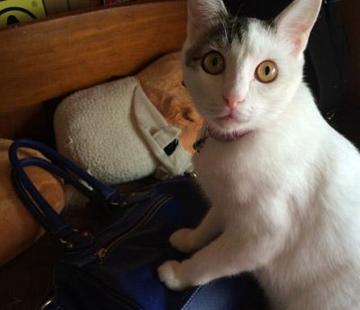 私は女の子!♥かわいい鞄独り占めのおませ猫ちゃん♥