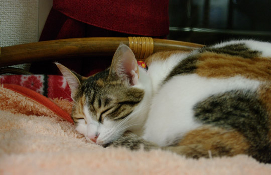 【元気でいてほしいからこそ】猫の病気の向き合い方①*闘病*