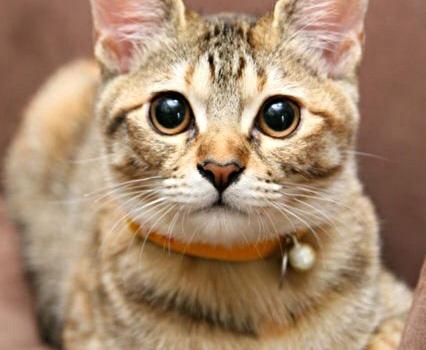 猫エピソード その2 ♥峠生まれのチビ猫ひなた♥