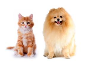 【彼氏彼女の相性診断】犬派彼氏×猫派彼女は振り回し、振り回される
