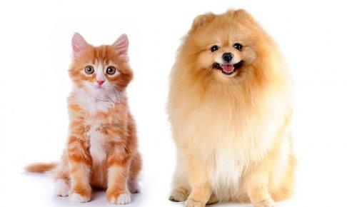 【彼氏彼女の相性診断】猫派彼氏×犬派彼女は、彼女のコントロール能力がカギ