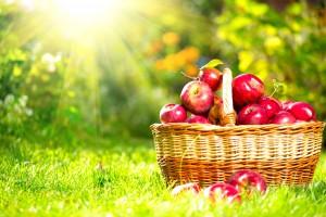 【夢占い】りんごの夢を見たら宝くじを買うべき?