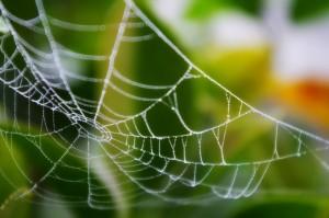 【夢占い診断】自分が蜘蛛の巣を張る夢の意味