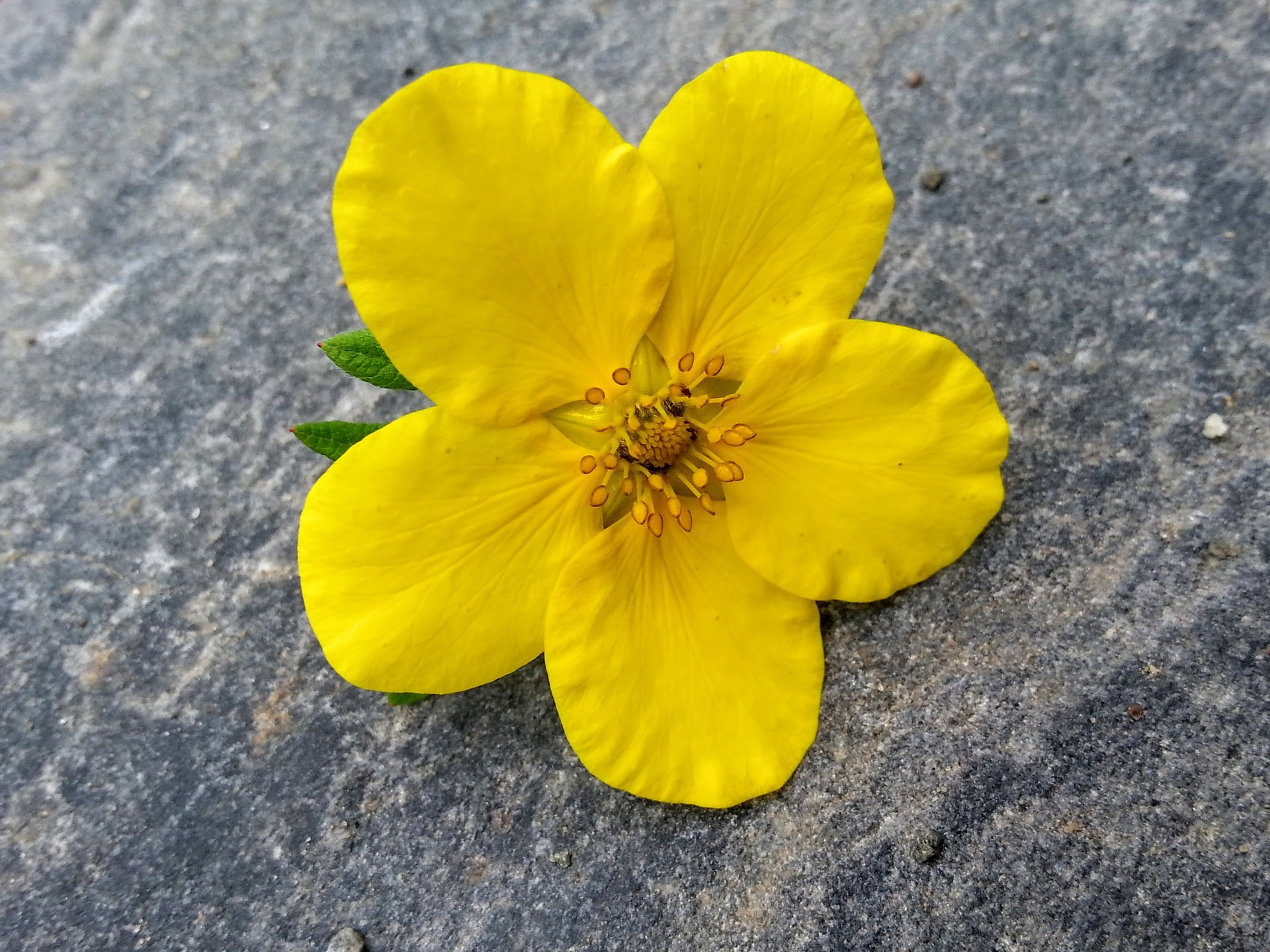 黄色好きな人の恋愛の対処法