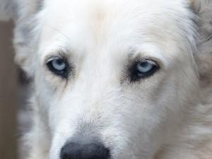 【夢占い】白い犬の夢は幸運のスピリチュアルサイン!