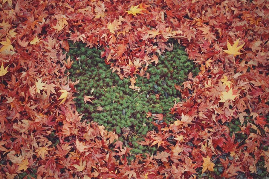 人肌恋しい季節に愛が深まるおススメの大人の秋デート5つ♡