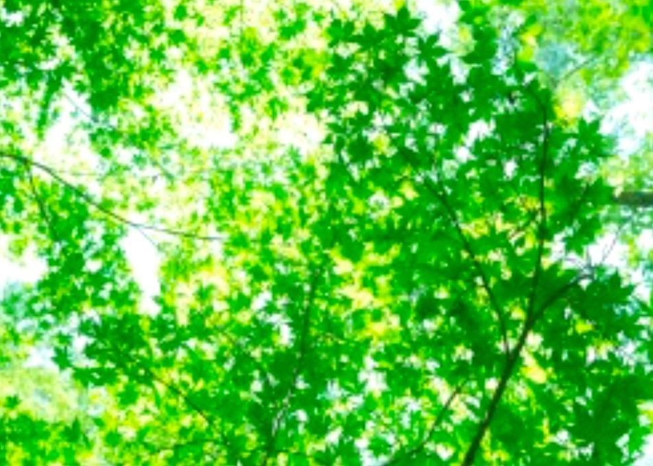 今日も一日HAPPYに★【気学】(2019年8月1日の運勢)希翔の毎日メッセージ