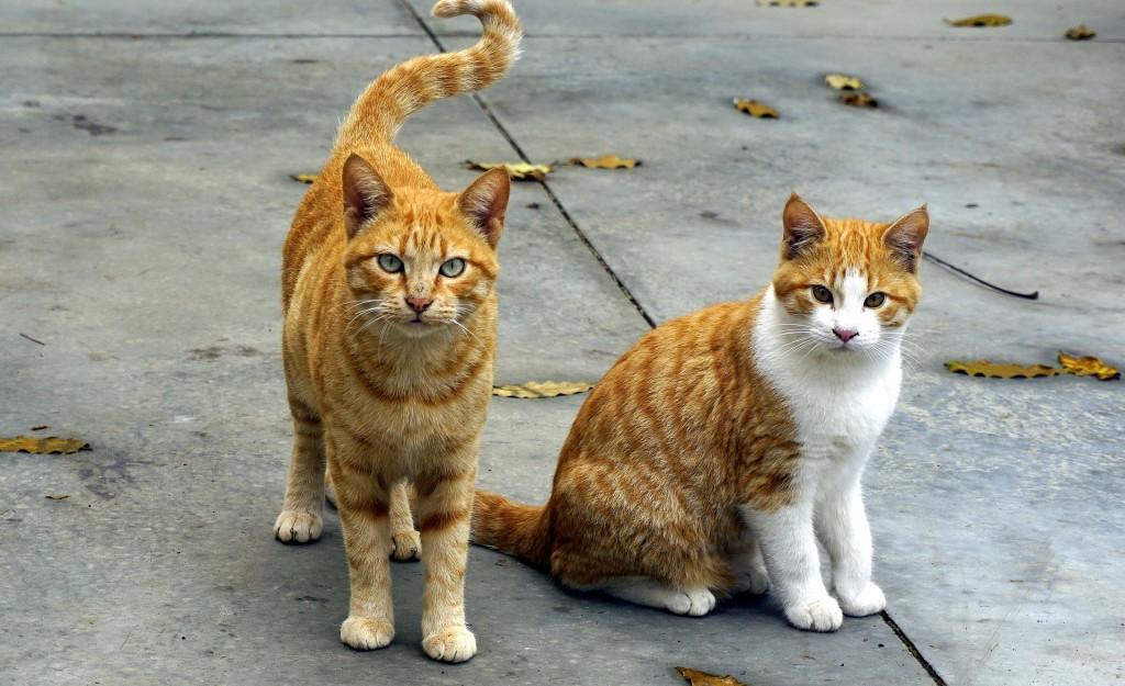 【彼氏彼女の相性診断】猫派彼氏×猫派彼女は気のおもむくままに過ごしてください