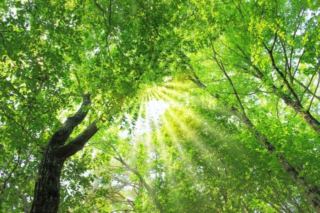 成功者は実践している【瞑想】の驚くべき効果