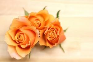 モテるおまじない オレンジ色のバラの画像をケイタイやスマホの待受にする