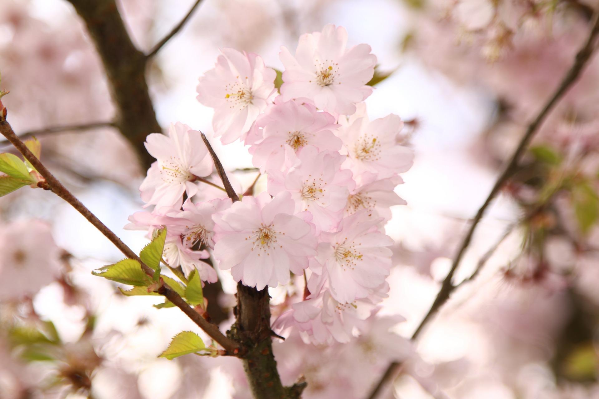 【毎日風水】3月27日の運気アップのおすすめ風水