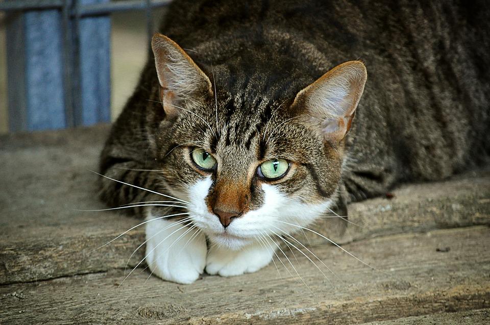 夢占い◆猫の夢の基本的な意味