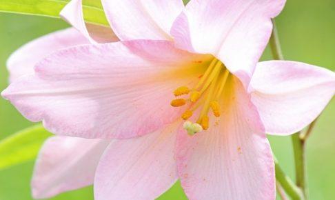 魅力的すぎてもダメかも?「高嶺の花」と言われる女性になかなか彼氏ができない5つの理由!