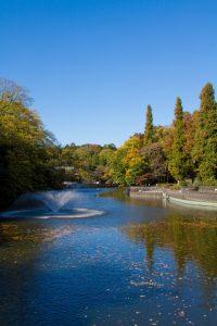 告白におすすめのデートスポット♡東京♡井の頭公園