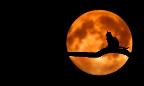 【芦屋道顕】猫は異界の生き物(1)猫が何もない空間を見つめる霊的な理由【真夏の怪談】