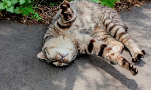 疲れた現代人へ最強の癒し効果!猫の触れ合い方を学んで癒されよう♡