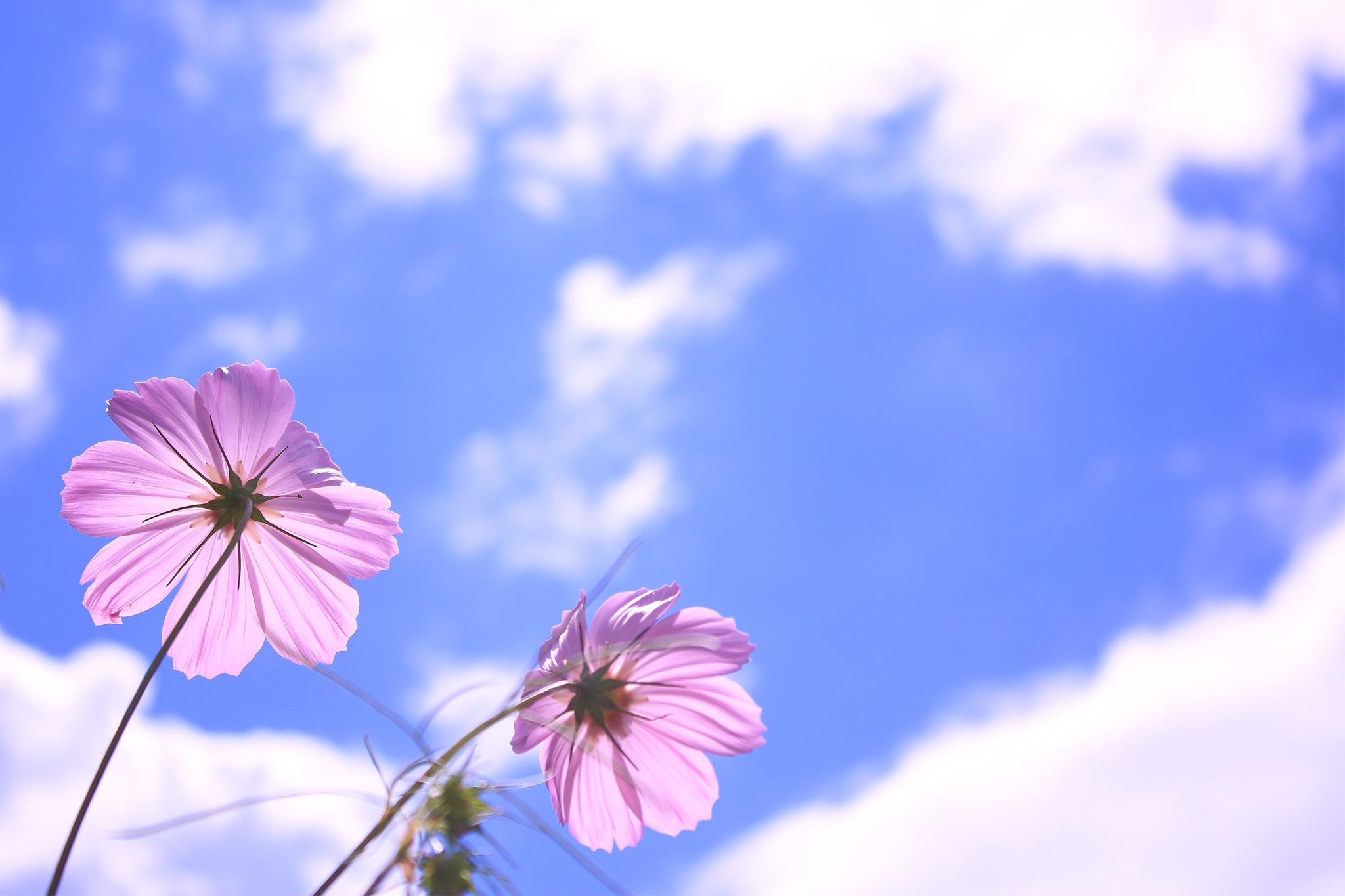 【今週の運勢】フラワーセラピストのオラクルカード診断 (2018年9月3日~2018年9月9日)