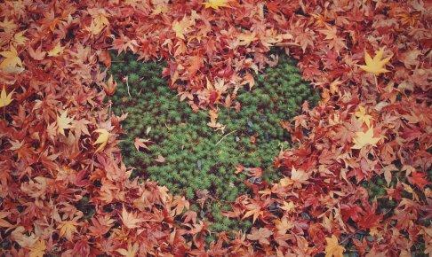 【九星別】好きな人にアピールしたい!あなたの魅力とは?~四緑木星・五黄土星・六白金星~