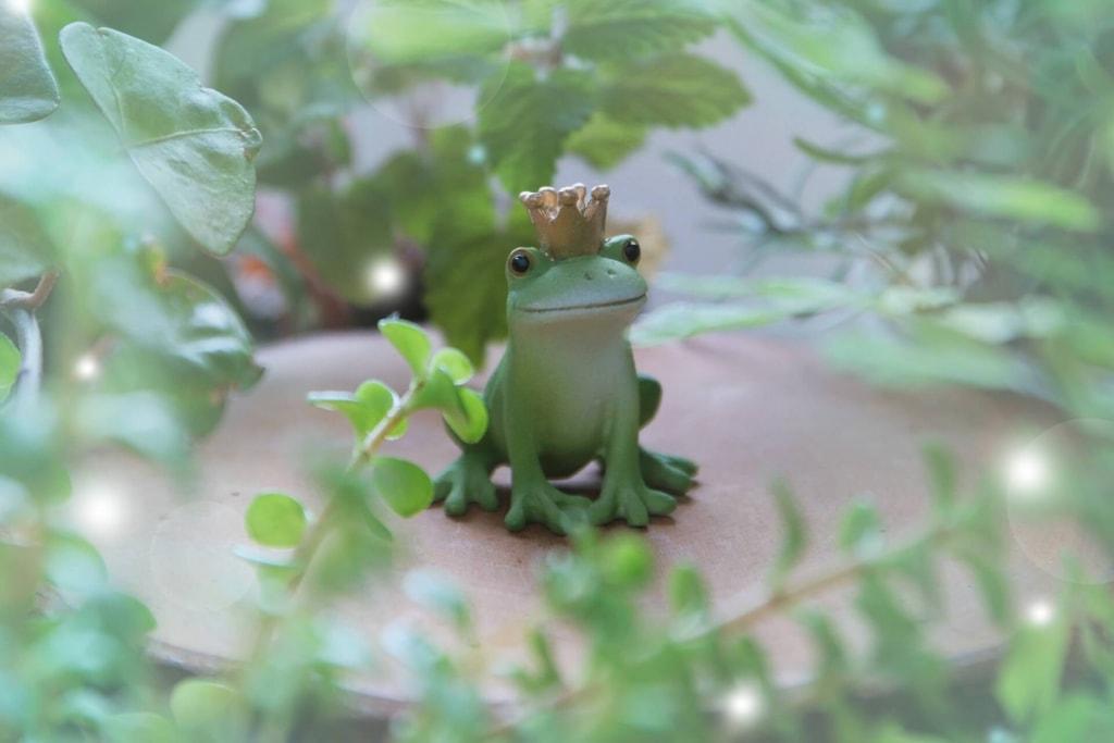 カエルの夢占い♥カエルの基本的な意味