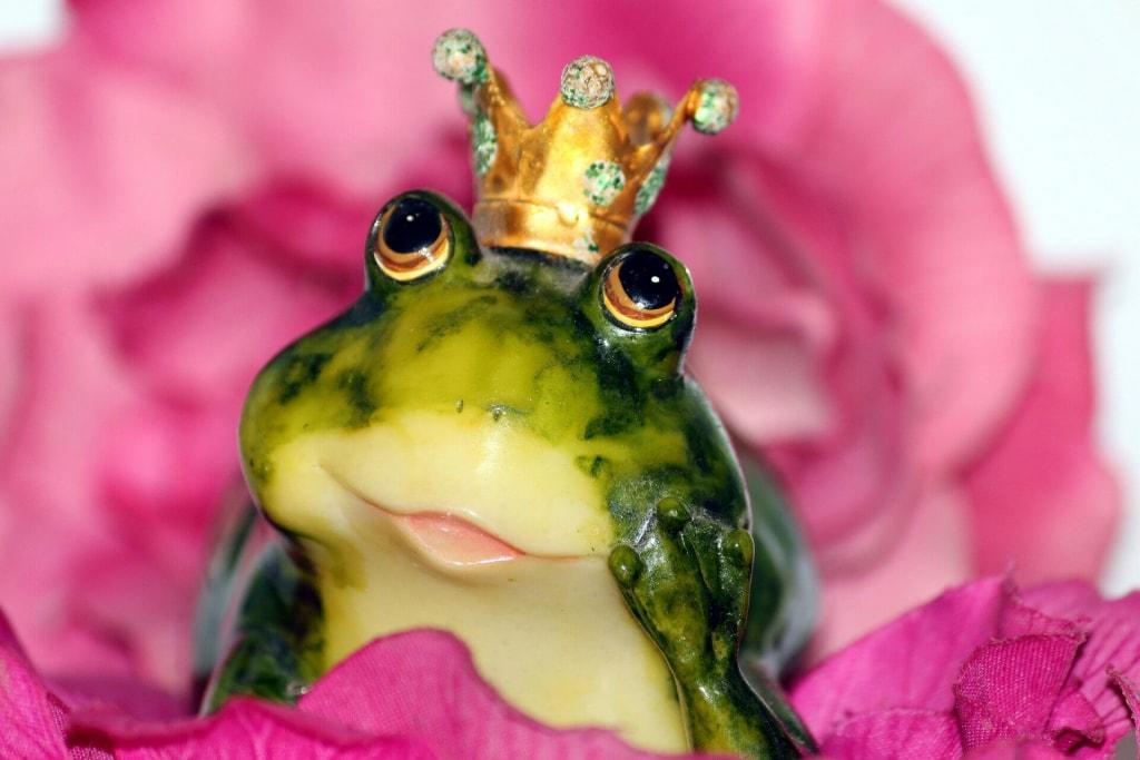 カエルの夢占い♥綺麗なカエルが現れる夢