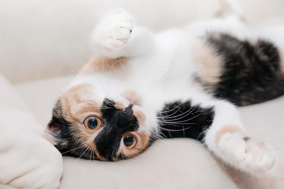 夢占い◆元気で綺麗な猫・可愛い猫の夢の意味