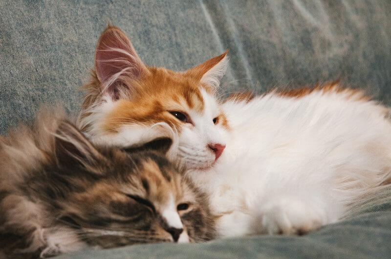【猫好きに】この冬・猫好きカップルが過ごしたい猫カフェデートスポット【悪い人はいない!】