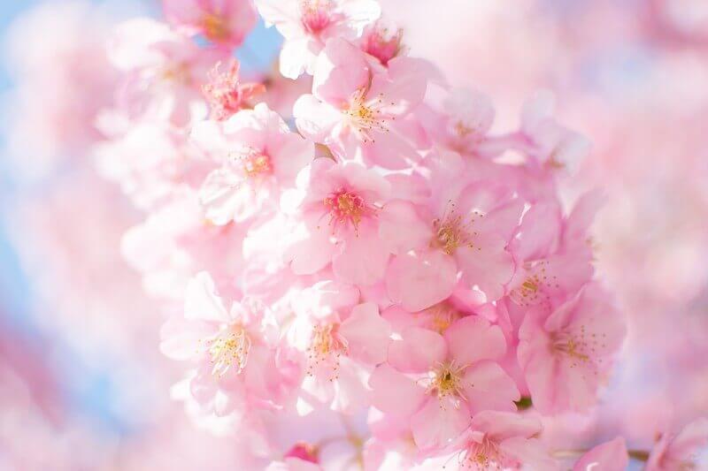 シャンクレール婚活体験記③春の装い