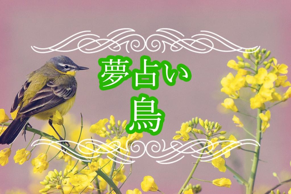 【夢占い】鳥の夢の意味!鳥のふん、鳥がなつく、鳥の大群に襲われる夢など