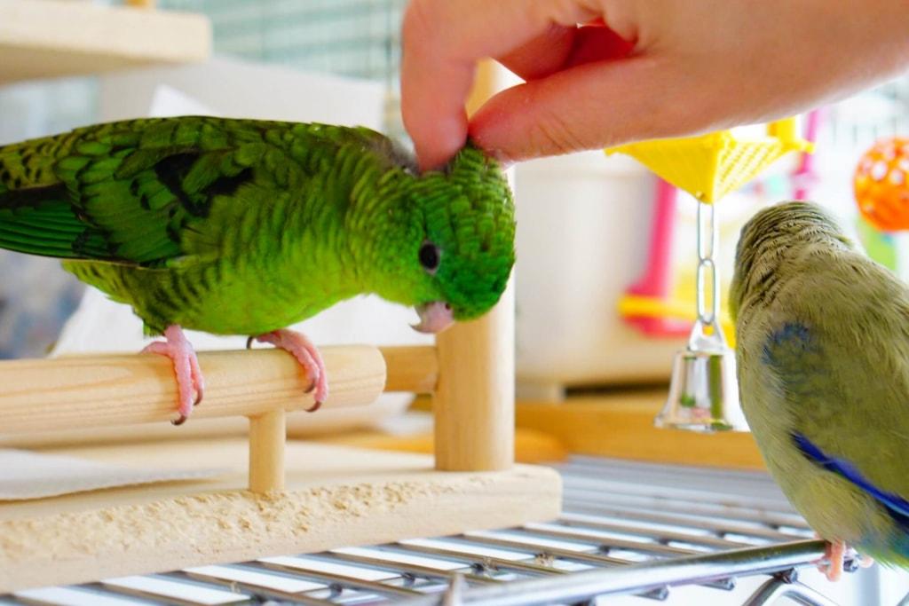 鳥の夢占い◆鳥がなつく夢