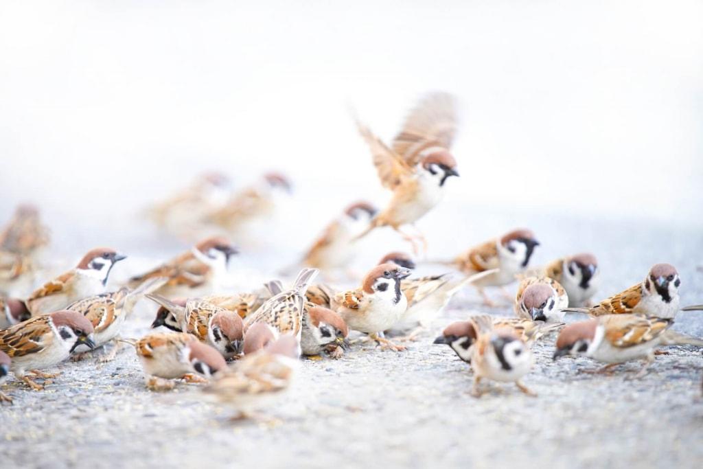 鳥の夢占い◆鳥の大群の夢