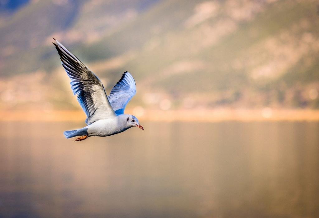鳥の夢占い◆鳥が飛び立つ夢の意味