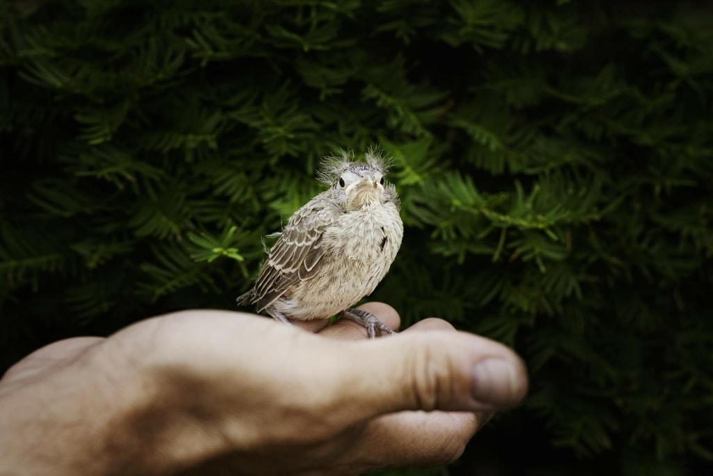 鳥の夢占い◆鳥が手の指に止まる夢の意味
