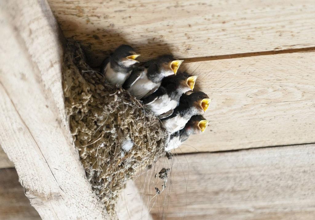 鳥の夢占い◆鳥の巣の夢