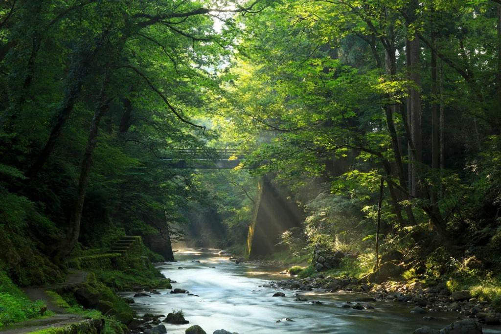 夢占い|川の水が綺麗な夢