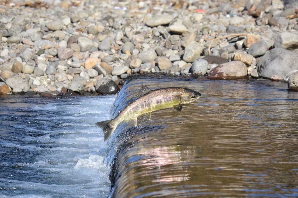 夢占い|川に魚が泳いでいる夢
