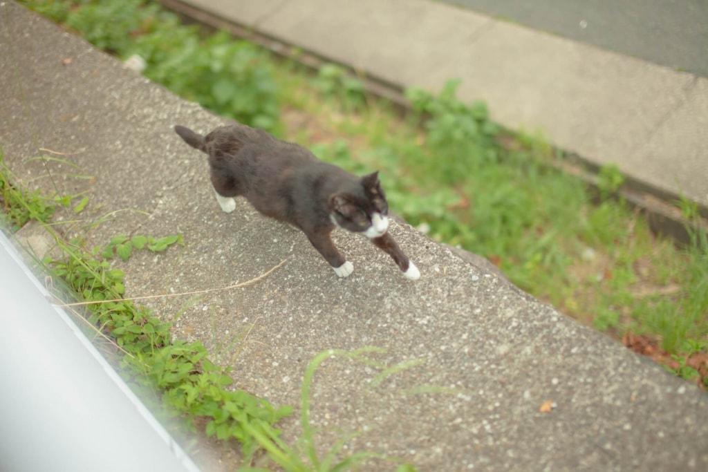 夢占い◆猫が逃げる夢の意味
