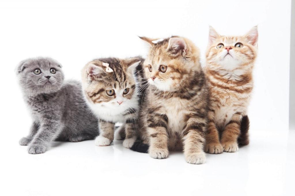 夢占い◆子猫の夢の意味